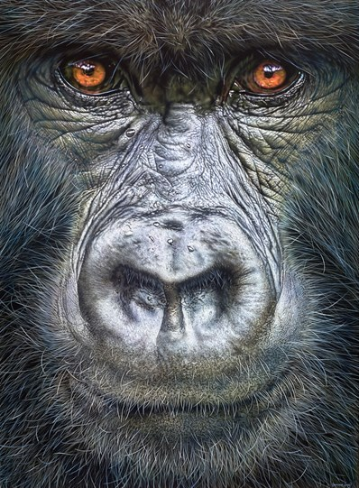 Gorilla Close Up by Christopher Green - Original Painting on Box Board